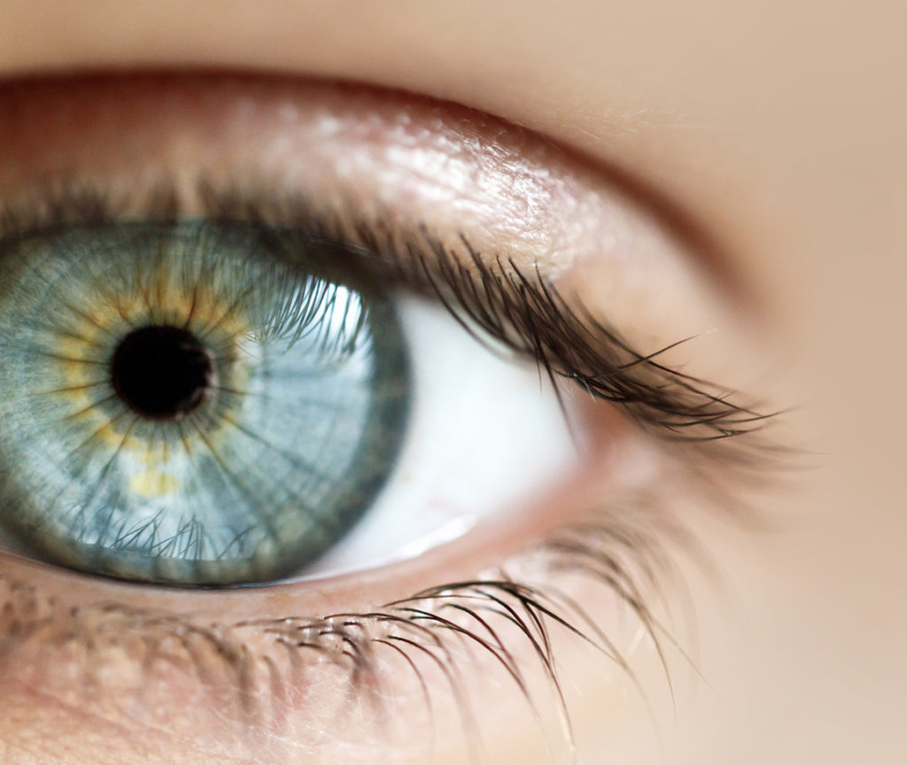 An Overview of Eye Health